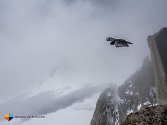Alpine Chough in flight (HendrikMorkel) Tags: mountains alps mountaineering chamonix alpineclimbing arêtedescosmiques arcteryxalpineacademy2015