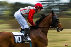 10 jockey à Séné (gillouvannes56) Tags: light horses horse france colors canon brittany bokeh lumière couleurs bretagne riding 7d highkey vannes chevaux filé séné