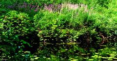Netherlands Nature (JaapCom) Tags: flowers trees nature water natural wezep ijsselvliedt jaapcom