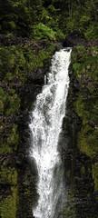 Akaka Falls - 007