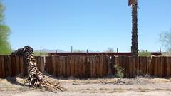 (Lynn Friedman) Tags: favstock unintentionallyfunny sleepy givingup thirsty sad depression drought palmtree weeping