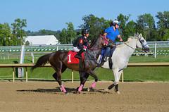 2015-07-31 (63) r6 Horacio Karamanos on #1 Imanindicanoutlaw (JLeeFleenor) Tags: photos photography md marylandracing marylandhorseracing laurelpark horaciokaramanos jockey   jinete  dokej jocheu  jquei okej kilparatsastaja rennreiter fantino    jokey ngi horses thoroughbreds equine equestrian cheval cavalo cavallo cavall caballo pferd paard perd hevonen hest hestur cal kon konj beygir capall ceffyl cuddy yarraman faras alogo soos kuda uma pfeerd koin    hst     ko  maryland