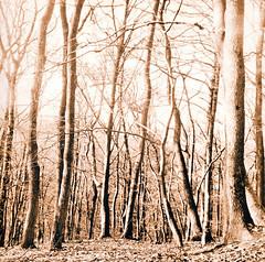 Lithprint (Claudio Taras) Tags: moersch se5 omega lith lithprint foresta alternativprint claudio contrasto controluce taras trier tlr fomapan rolleiflex35f rodinal rollfilm fomafomatonemg131 grain grana germania fineprint 6x6 stampa bw biancoenero bokeh alberi