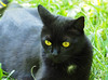 Kater Kocio (arjuna_zbycho) Tags: blackcat tuxedo tuxedocat kater hauskatze cat animal cute animals pets gato kitten feline kitty kittens pet tier haustier katzen gattini gatto chat cats kocio