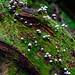 Açores :  PARASOLS