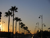 Palms and street lamps, avenue in setting sun, Fez, Morocco (Paul McClure DC) Tags: fez morocco almaghrib fès dec2016 architecture