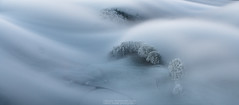 Elegance (naturemomentsphotography) Tags: nebel nebelstimmung solothurn jura schweiz switzerland welle fineartprints fine art landschaft landscape photographer fineartphotographer suisse