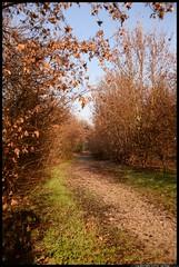 DSZ_6791-17-12-2016 - boschi vecchia dogana (r.zap) Tags: boschi vecchiadogana rzap parcodelticino