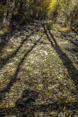 _MG_8147-Silver-Lake--Shadows (1st Evergreen) Tags: shadows driedstreambed easternsierras fallcolor california silverlake