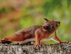 Rode eekhoorn - Red squirrel - Scuirus vulgaris (Foto by Yves) Tags: garden woods rodent fantasticnature smallinnature bestofsquirrels