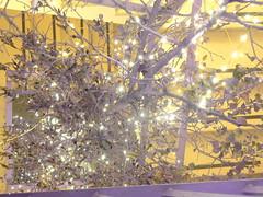Lavendellichtexplosion a (AnnAbulf) Tags: fvg fjv friauljulischvenetien friuliveneziagiulia beleuchtung illuminazione albero baum lavendelhaus casadellalavanda lavendel lavanda tre´ppenhaus trombadellescale venzone carnia karn peuscheldorf