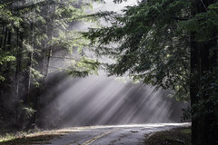 I Brake for Sunbeams (pixelmama) Tags: california pixelmama mendocinocounty comptche comptcheukiakroad ukiah sunbeams explore