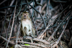 monkeys-1015