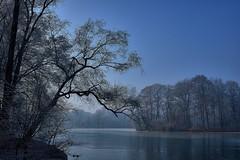 Winter in Munich (Arx Zyanos) Tags: a6500 sony ilce6500 zeiss batis zeissbatis zeissbatis225 zeissbatis2520 munich münchen landscape winter englischergarten cool trees tree water lake see wasser cold blue