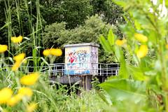 Diest (Luc Herman) Tags: flower nature graffiti belgium box ll flanders vlaanderen broek diest vlaamsbrabant webbekoms