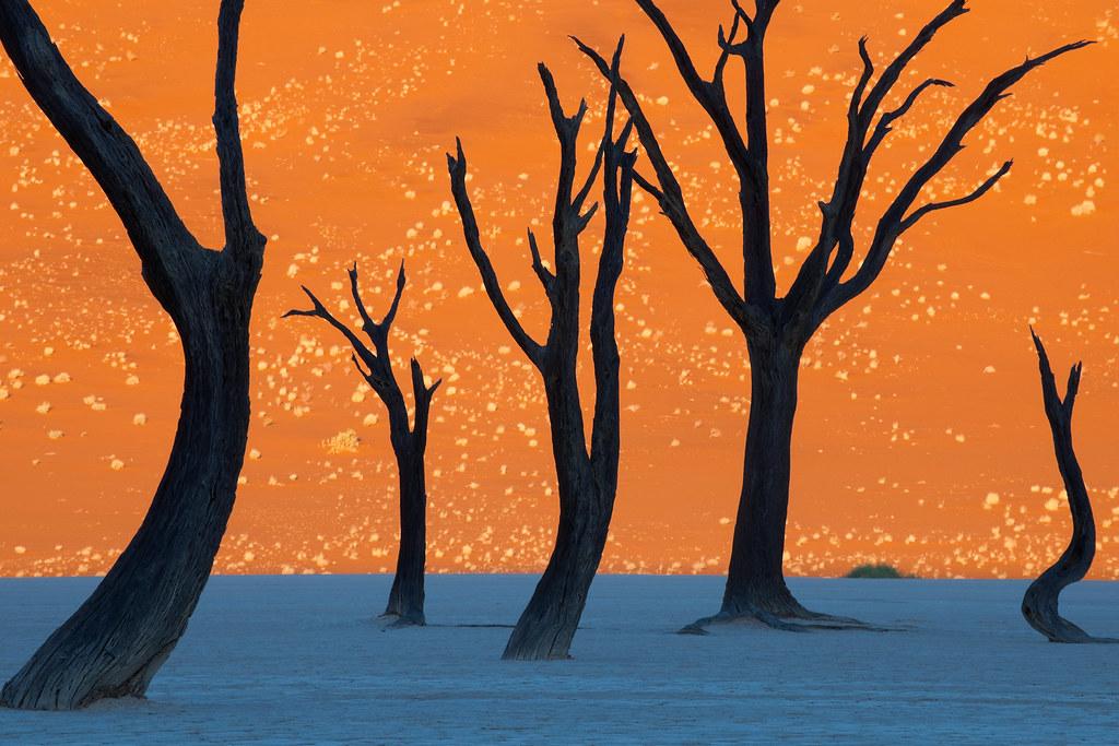 2Một bức ảnh thật ghi lại cảnh tượng hiếm thấy ở công viên Namib đã từng gây nhiều tranh cãi