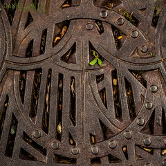 life & death on the grid (DMotown) Tags: life plant metal grid rust iron steel guard dirt corrosion dity deathcricket
