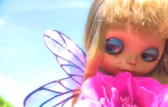 7. Butterflie