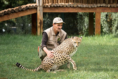 Friendship (aminefassi) Tags: portrait people nature animal canon guepard morocco human maroc 5d cheetah rabat felin acinonyxjubatus ef70200mmf28 temara aminefassi zoodetemara