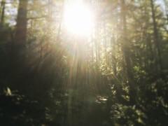 Hello Sun (harminder dhesi photography) Tags: bayarea norcal northbay california sonomacounty sonoma santarosa loftus liberty snapseed hipstamatic light sun view nature park blur trees outdoors winter hiking landscape