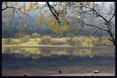 Yellow Leaves (albireo 2006) Tags: lochvoil trossachs thetrossachs reflection autumn leaves lake loch scotland uk