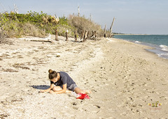 Hunting for Sharks Teeth (SteveFrazierPhotography.com) Tags: stumppassbeach statepark sunset sand shoreline shore girl teen teenager seashellhunting sharksteeth gulfofmexico gulfcoast charlottecounty florida fl coastline coast beach logs deadtrees stumps roots invasivespecies may 2016 lateafternoon evening shadows waves stevefrazierphotography canoneos60d water color beautiful scene scenery waterscape landscape brush shells seashells afternoon horizon