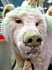 I Will Eat You (knightbefore_99) Tags: bear white polar eat yvr airport bc canada cool fur awesome teddy big devour snout teeth ours