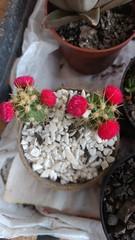IMG_20161215_192123349 (Rodrigo Ribeiro) Tags: flor flower garden gardening jardim jardinagem nature natureza flores