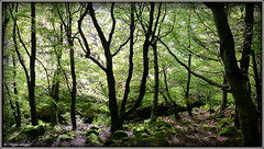 """"""" Careless Whisperers """" ("""" P@tH Im@ges """") Tags: trees wood beech spirits whispers magic celts dannan de tuatha colours fairies banshee knock glencullen ancient mary anne great aunt"""