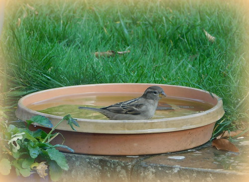 Birdy bath time.