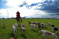 For fox sake (Andy WXx2009) Tags: horses dogs hound man horseback field foxhunt fonmon running runners chasing sky hunt wales europe landscape artistic