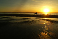 004 A horseman riding by (Enough with the peanuts already) Tags: sunset horseman rider beach gallop estuary tidal horse sillouette