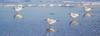 4+4 Sea Gull Reflection (photalena) Tags: ostsee 7dwf bird