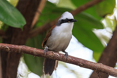 20160324-IMG_2459 (alischa1965) Tags: 2016 florida miami tiere vogel zoomiami