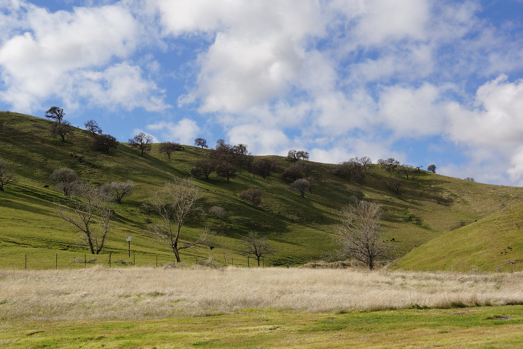 2017-01-05 Contra Loma Regional Park (#2)