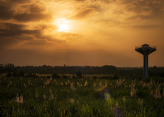 Sunset glow over cane field (Pillar1984) Tags: zhongyi mitakon sugarcane sunset zhanjiang lumix 25mm f095 micro four thirds field south subtropical crops research institute sscri