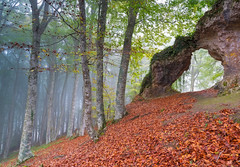 Secretos del bosque (Ekaitz Arbigano) Tags: ekaitz arbigano euskadi basque country montaña alavesa forest bosque niebla fog foggy rocks arco arbol tree landscape long exposure paisaje larga exposicion mystic atmosphere
