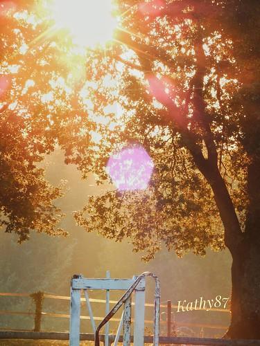 Brouillard de fin d'automne