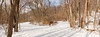 A winter walk (kwtracyghostship) Tags: frickpark kwtracyghostship winter alleghenycounty commonwealthpa westernpa swissvale pennsylvania unitedstates us path trails landscape woods cold fork snow pittsburghparks panorama