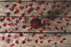 (CarolienCadoni..) Tags: sonyslta99 sony 50mmf14 sal50f14 ranonkel red dof bokeh still flowers