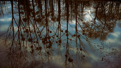 Water reflexion (Sohmi ︎) Tags: nikonflickraward water eau reflexion reflets arbres trees ciel sky bretagne brittany france french loireatlantique nikond810 tamronsp2470mm ©sohmi paysage landscape finegold naturesprime