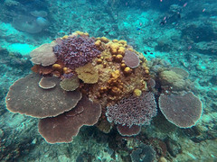 Mantanani Island Sabah Borneo (Eddie Yip) Tags: sabah mantananiisland mantanani borneo malaysia gopro 沙巴 美人魚島 馬來西亞 coral snorkeling