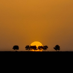 Behind the trees (mehrzad ansari pour) Tags: sunset tree silhouette iran tags popular  kerman  mahan    500px  ifttt
