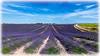AL-Lavande-Tournesols-20150626-001.jpg (Shoot Enraw) Tags: champs provence 26juin lavandes valensole 18200mmf3556 1116mmf28