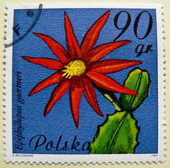 beautiful stamp Poland Polska 90 Gr (Epiphyllopsis / Hatiora  gaertneri, Paascactus; cactus, Kaktusblüte) znaczki znaczków pocztowych Polska bélyeg Lengyelország Briefmarken Polen марки Польша bollo francobolli Polonia الطوابع البريدية بولندا timbres 90Gr (stampolina, thx! :)) Tags: flowers blue red cactus color colour beautiful postes stamps poland polska blumen stamp polen colourful tem polonia postzegel selo kaktus bolli pologne sello sellos briefmarken польша polsko frimärken 邮票 francobollo selos puola pólland timbres lenkija frimærker марки francobolli bollo 切手 zegels 波兰 우표 zegel polija polandia znaczki markica スタンプ بولندا paascactus perangko frimerker hatioragaertneri पोलैंड 폴란드 pulları طوابع πολωνία пољска epiphyllopsisgaertneri แสตมป์ γραμματόσημα маркица bélyegek टिकटों antspaudai razítka