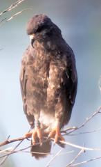 20150720-_74P8043.jpg (Lake Worth) Tags: bird nature birds animal animals canon wings florida wildlife feathers wetlands everglades waterbirds southflorida 2xextender sigma120300f28dgoshsmsports