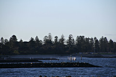 2015 Sydney: Botany Bay #29 (dominotic) Tags: beach water plane airplane boat yacht jet sydney australia nsw newsouthwales watersports tasmansea botanybay tanker sydneyairport brightonlesands portbotany 2015 penalcolony airportrunway sydneykingsfordsmithairport australianpenalsettlement