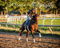 Tonalist (EASY GOER) Tags: summer vacation horses horse ny newyork sports beauty race canon athletics track saratoga competition upstate running racing course event 5d ponies athletes tradition races sporting spa thoroughbred equine exciting thoroughbreds markiii