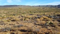 20161210_092143 (Ryan/PHX) Tags: trailrunning bct blackcanyontrail arizona desert outdoors ultrarunning aravaiparunning