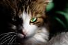 Livin' On The Edge (miyukiz4 ɥsıןƃuǝ ɹood) Tags: cats cat kitten котенок gttino chaton gatito kätzchen gatinho coth5